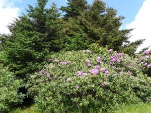 flowers on Raon Mt.7