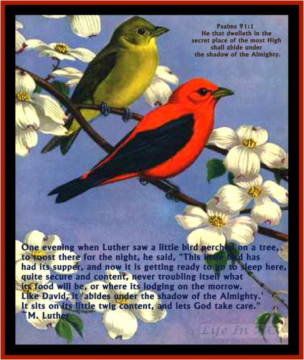 Dwell in the secret place of the most High.  He cares for the birds, He will care for you!